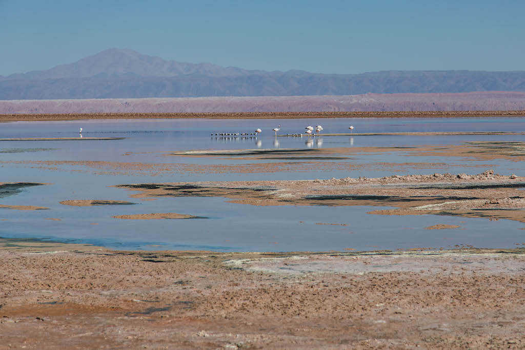 Flamingos seen at the Laguna Chaxa in the Atacama Desert in Chile