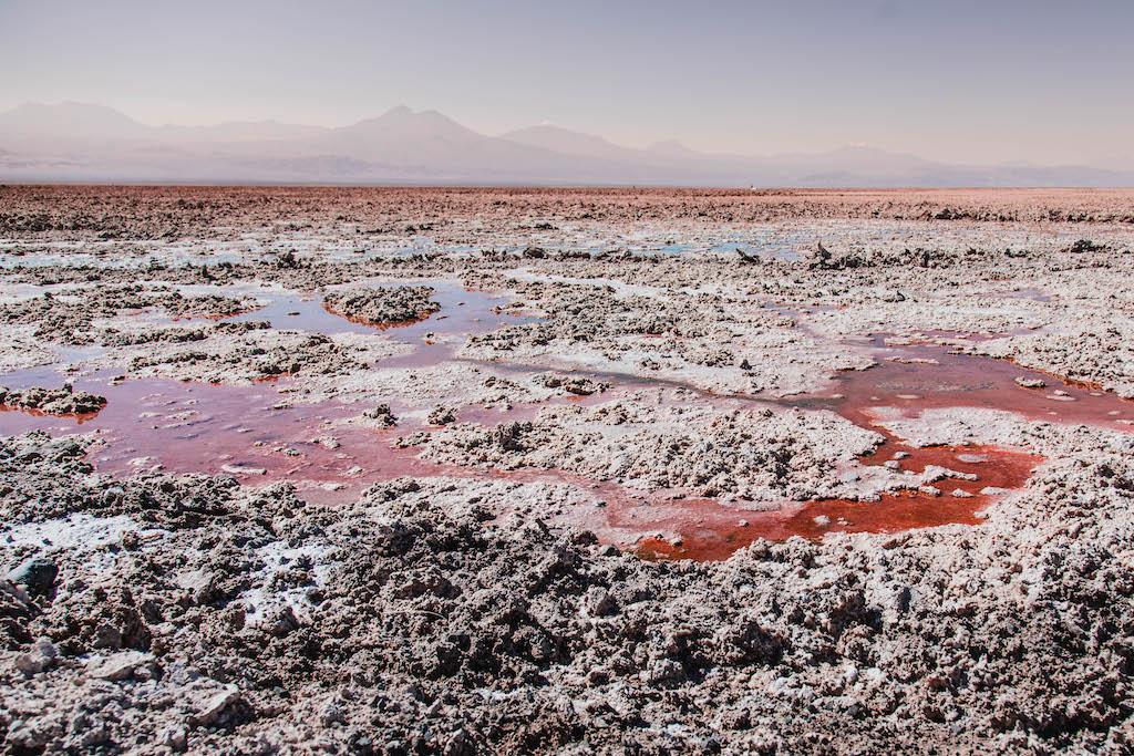 Red hues of Laguna Chaxa